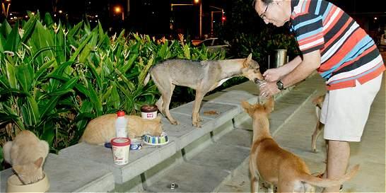 Bienestar animal ahora es un hecho metropolitano
