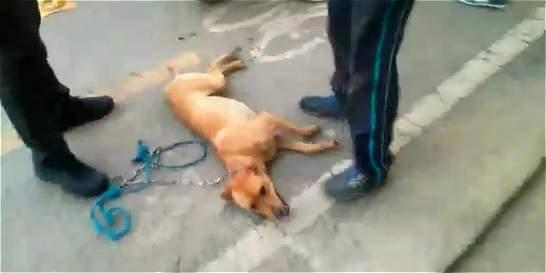Video: hombre en moto arrastra a su perro varias cuadras en Antioquia