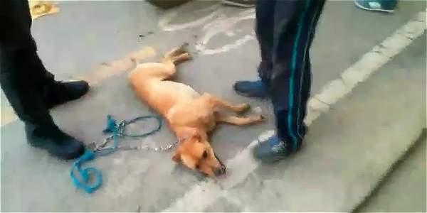 Hombre arrastró a su perro en moto por varias cuadras en Antioquia