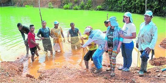 Peces sin mercurio, idea contra el trabajo infantil en Antioquia