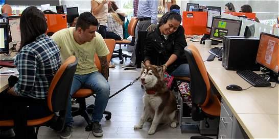 Empresas abren sus puertas a las mascotas en Medellín