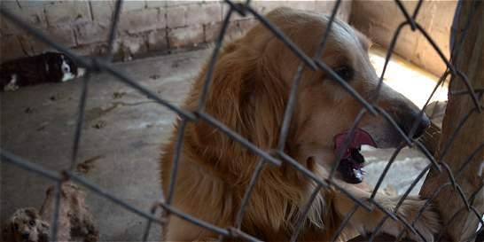 Fueron rescatados 83 animales de un criadero en el Valle de Aburrá