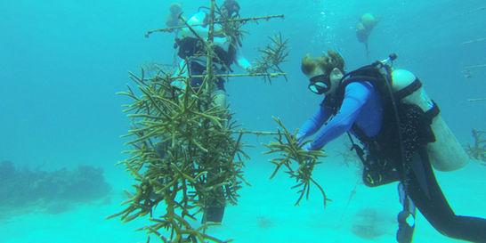 El plan para salvar los arrecifes de las islas del Rosario