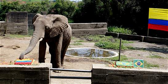 Elefante que acertó victoria con Uruguay predice triunfo de Colombia