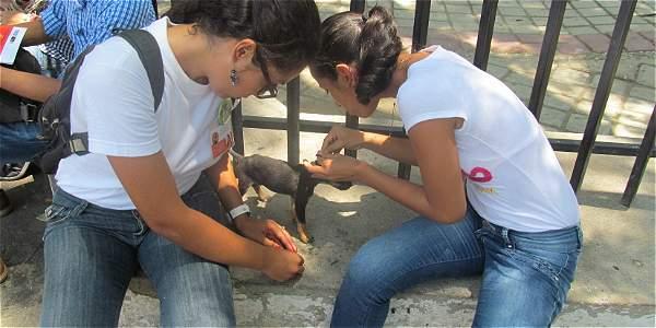 Fundaciones protectoras de animales proponen esterilizar y vacunar a animales callejeros en Santa Marta.