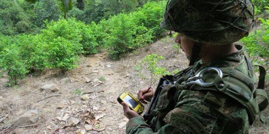 Con GPS Ejército erradica cultivos ilícitos en el nororiente del país