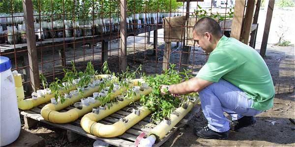 Acuicultura con cultivos hidrop nicos archivo digital de for Fuentes con peces