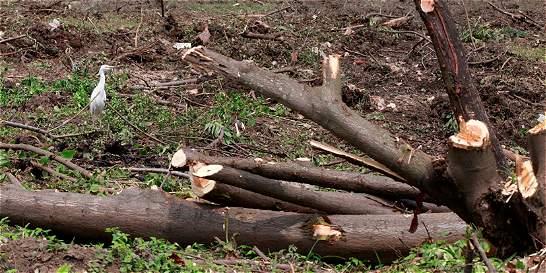 Denuncian tráfico de madera en el departamendo del  Meta