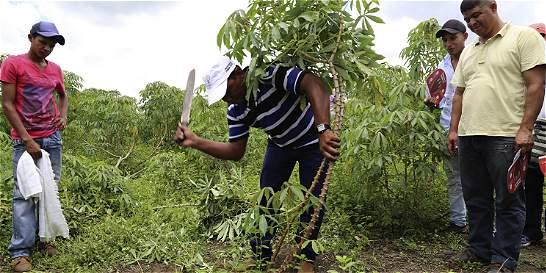 Minagricultura anuncia $46.800 millones en el 2015 para el agro