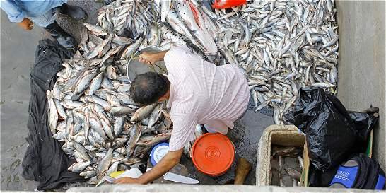 La sequía en Barrancabermeja incrementa la venta de pescado