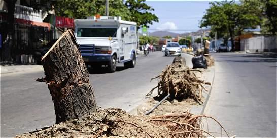 Samarios se oponen a tala de árboles