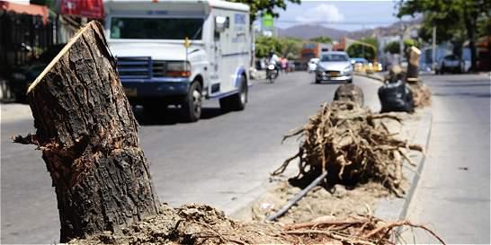 Piden medidas de la Alcaldía de Santa Marta ante tala de árboles