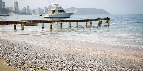 Hay emergencia por mortandad de peces en El Rodadero, Santa Marta