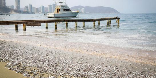 Fenómeno natural sería la causa de mortandad de peces en Santa Marta