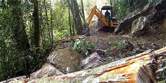 Abren sancionatorio contra alemán por tala de bosque en Sierra Nevada