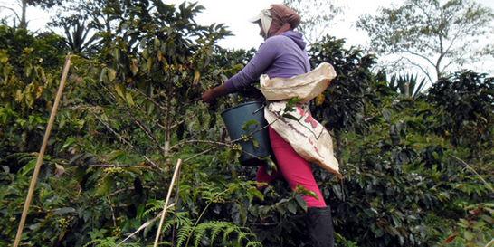 Las exautodefensas de Ortega que ahora cultivan café con aroma de paz