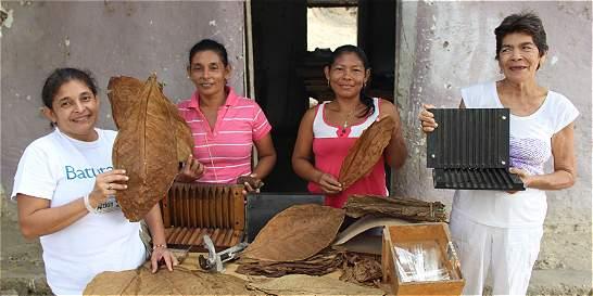 El tabaco renace en el Salado gracias al sueño de 25 mujeres