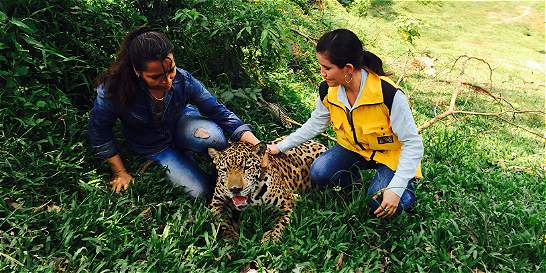 Rellenos sanitarios en Santander afectarían hábitat de los jaguares