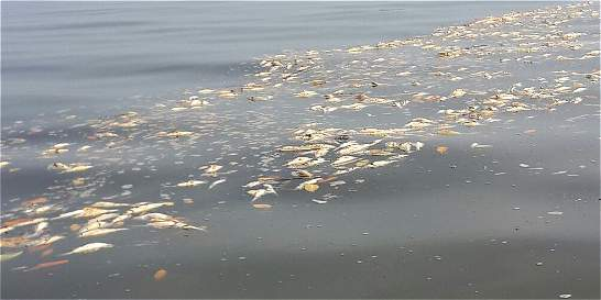 Tres toneladas de peces han muerto en la Ciénaga Grande de Santa Marta