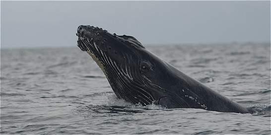 Espectáculo de ballenas en el Pacífico