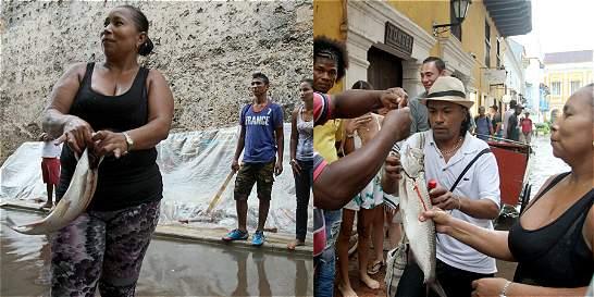 Atrapan pez en plena calle del Centro Histórico de Cartagena