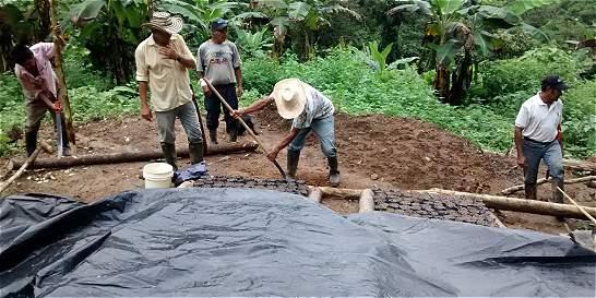 Campesinos buscan ayuda para exportar semilla sachi inchi