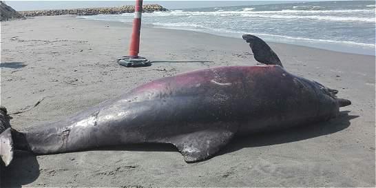 Encuentran muerto a un delfín en una playa de Cartagena