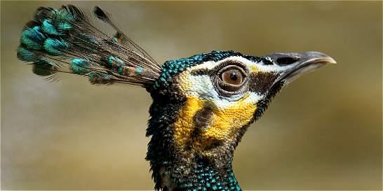 En fotos: las coloridas especies del Aviario Nacional