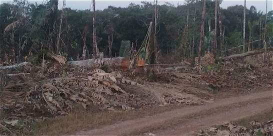 La tala ilegal de árboles que azota al Guaviare