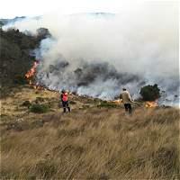 Cada día se han producido 18 incendios forestales en lo que va de 2016