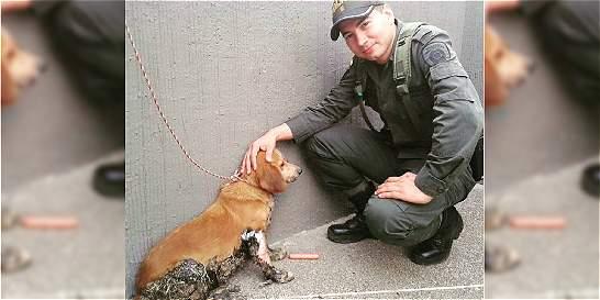 Salvan la vida de perra atacada con brea caliente