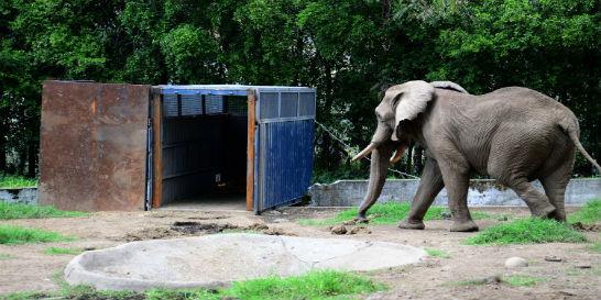 El Bioparque Ukumarí comenzó a recibir a los animales africanos