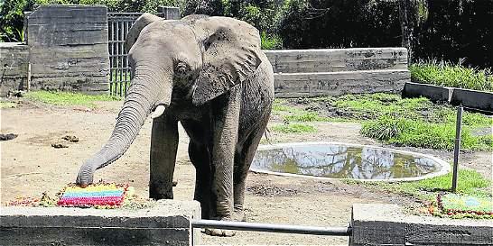 Zimbabue, el elefante más querido por Pereira, se fue de la ciudad