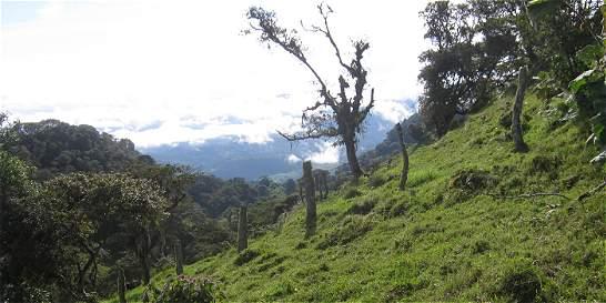Así fue saqueado un cementerio indígena de Santander