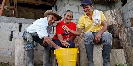 El mejor café de Caldas, lo cultiva Reinaldo Cuartas