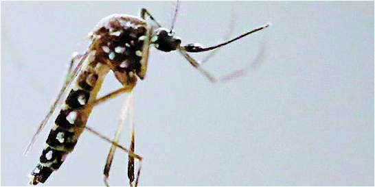 El mosquito del zika ya 'escaló' hasta Manizales