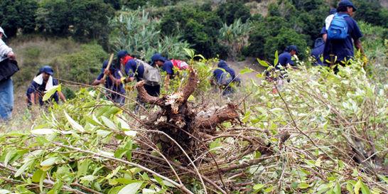Volvió el 'boom' de la coca a municipios costeros de Nariño