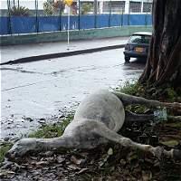 Repudio por muerte de caballo a bala en cabalgata de Calarcá