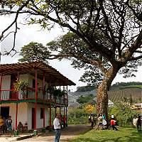 Tras 5 años el Paisaje Cultural Cafetero sigue enfrentando riesgos