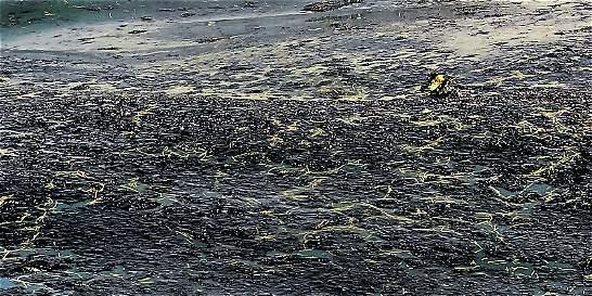 Multan a transportadora de crudo que contaminó acueducto de Pitalito
