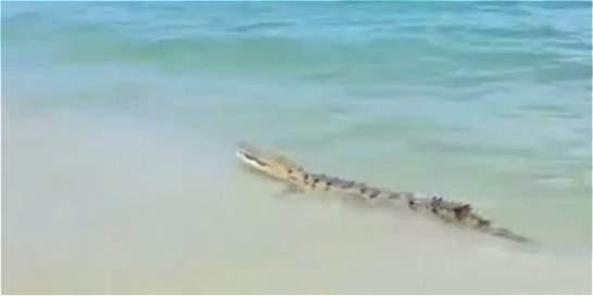 Video: cocodrilo aguja sorprende a turistas en el parque Tayrona