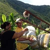 El plan para asegurar la producción de café