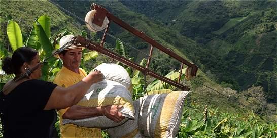 Campesinos colombianos progresan con el aroma del café