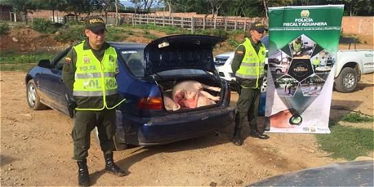 Retienen una tonelada de carne en ruta de ingreso a Central de Abastos