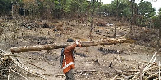 Acuerdo busca 'blindar' al Magadalena contra la deforestación
