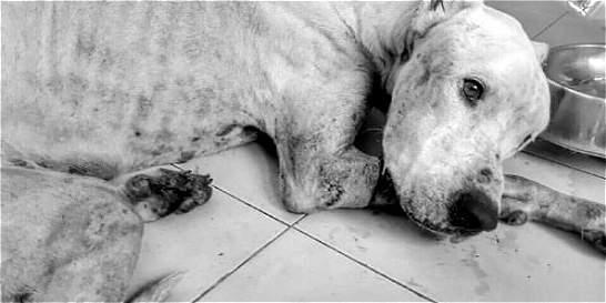 Maltrato animal, la cara no amable de San Andrés