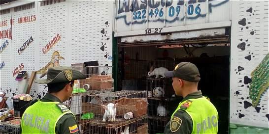 Policía incautó 65 animales en una tienda de Armenia
