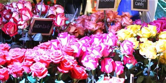 Empresas de flores del país necesitan unos 18.000 empleados