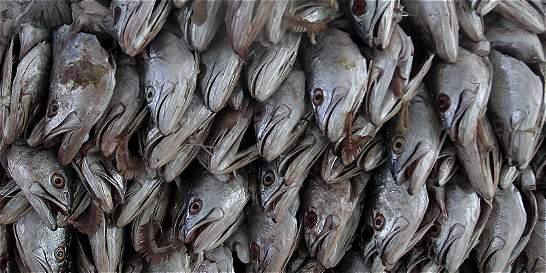En Colombia ahora se pesca menos, pero se consume más