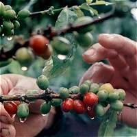 Colombia reduce compra de café en el exterior
